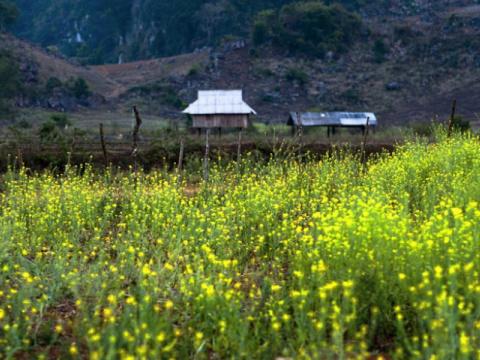 Lên Mộc Châu ngắm sắc hoa rực rỡ khi mùa Xuân về